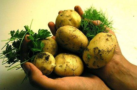 A burgonya kilója a háromszáz forintot is elérheti